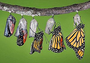 en marketing, adaptarse es como respirar